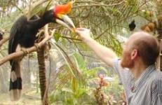 Stewgreen with a hornbill in KL photo