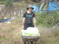 Stew Green moving rice in Korea photo